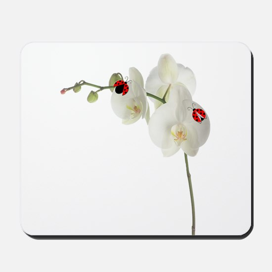 Lady Bug Orchid Mousepad