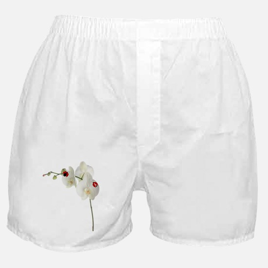Lady Bug Orchid Boxer Shorts