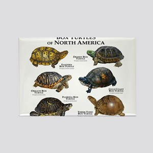 Box Turtles of North America Rectangle Magnet