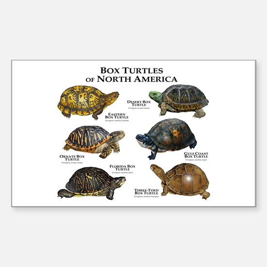 Box Turtles of North America Sticker (Rectangle)