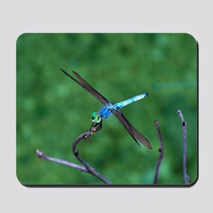 Beautiful Blue Dragonfly Mousepad