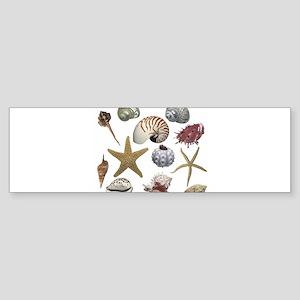 shells Sticker (Bumper)