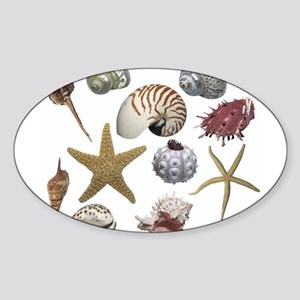 shells Sticker (Oval)
