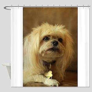 indoor dogs floppy ears Koko blond Shower Curtain