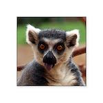 Lemur Square Sticker 3