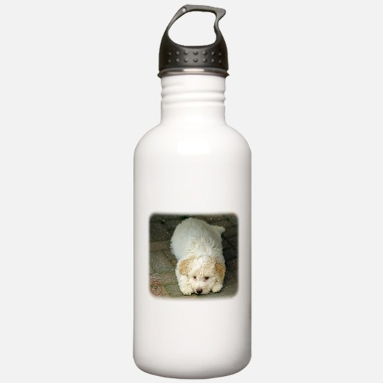 Lagotto Romagnollo 8T22D-12 Sports Water Bottle