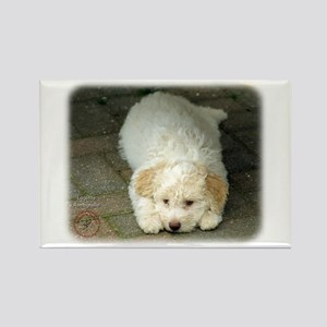 Lagotto Romagnollo 8T22D-12 Rectangle Magnet