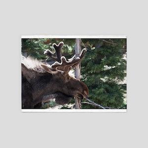 Srping Moose 5'x7'Area Rug
