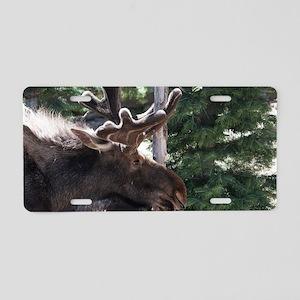 Srping Moose Aluminum License Plate