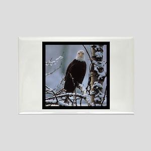 Bald Eagle Rectangle Magnet