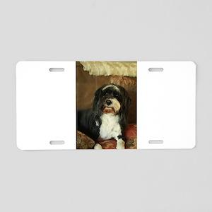 indoor dogs floppy ears,Kon Aluminum License Plate