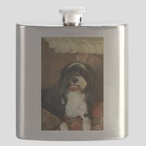 indoor dogs floppy ears,Konnor Tibetan terri Flask