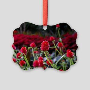 Gomphrena Picture Ornament