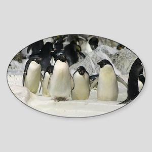 Group of Adelie Penguins Sticker (Oval)