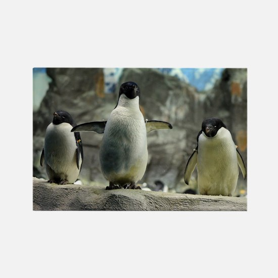 Adelie Penguins Rectangle Magnet (100 pack)