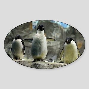 Adelie Penguins Sticker (Oval)