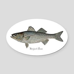 Striped Bass (Striper) Oval Car Magnet