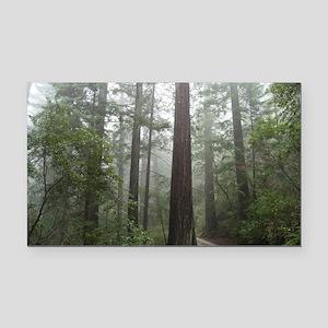 Redwood Forest Fog Rectangle Car Magnet
