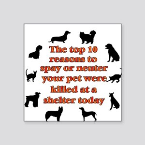 The top 10 reasons to spay or Square Sticker