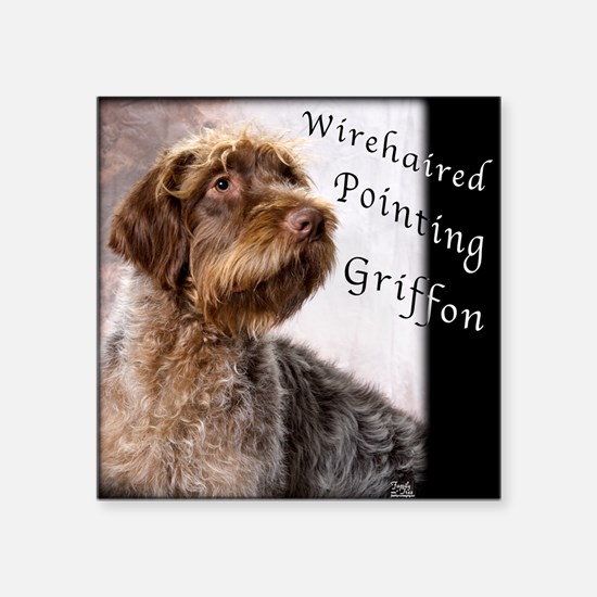 Wirehaired Pointing Griffon Square Sticker