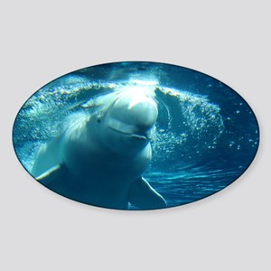 Close up of a Beluga Whale 5 Sticker (Oval)