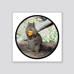Chipmunk eating a cheez-it Square Sticker