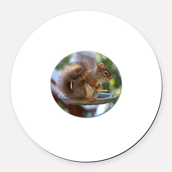 Red Squirrel I Magnet