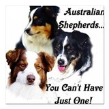 Animals australian shepherd Square Car Magnets