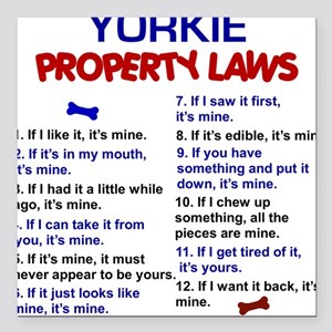 Yorkie Property Laws 3 Square Car Magnet