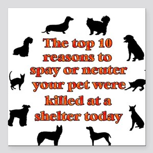 The top 10 reasons to spay or Square Car Magnet