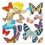 """Butterflies Square Car Magnet 3"""" x"""