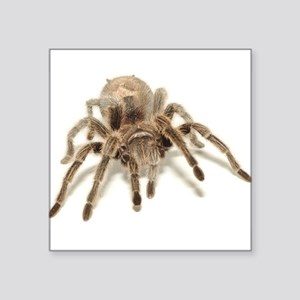 "1326h0017tarantula Square Sticker 3"" x 3"""