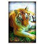 Exotic Tiger Large Poster