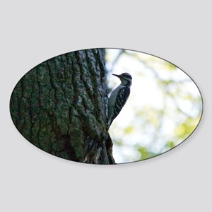 The Woodpecker Sticker (Oval)