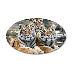 TIGERS 22x14 Oval Wall Peel
