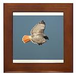 DBWF Red Tailed Hawk in Flight Framed Tile