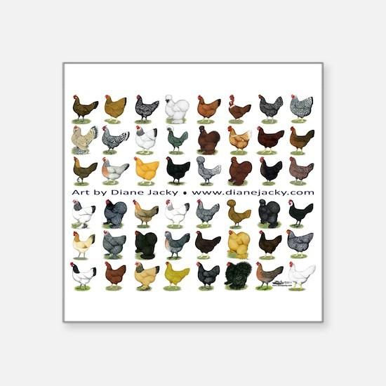 """48 Hens Promo Square Sticker 3"""" x 3"""""""