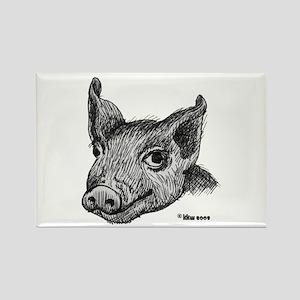 Potbelly Pig Rectangle Magnet