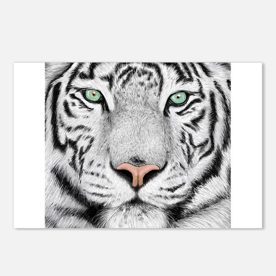 White Tiger Postcards (Package of 8)
