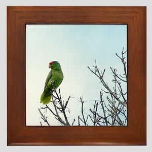 Red Crested Parrot Framed Tile