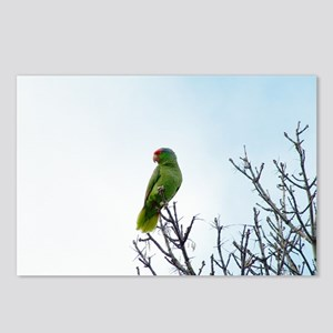 Red Crested Parrot Postcards (Package of 8)