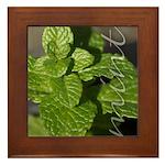 Mint Framed Tile