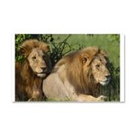 Two male brother lions Car Magnet 20 x 12