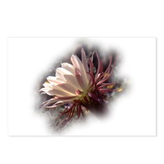White Cactus Flower Postcards (Package of 8)