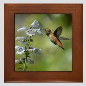 Hummingbird 4851 - Framed Tile