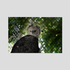 Harpy Eagle Rectangle Magnet