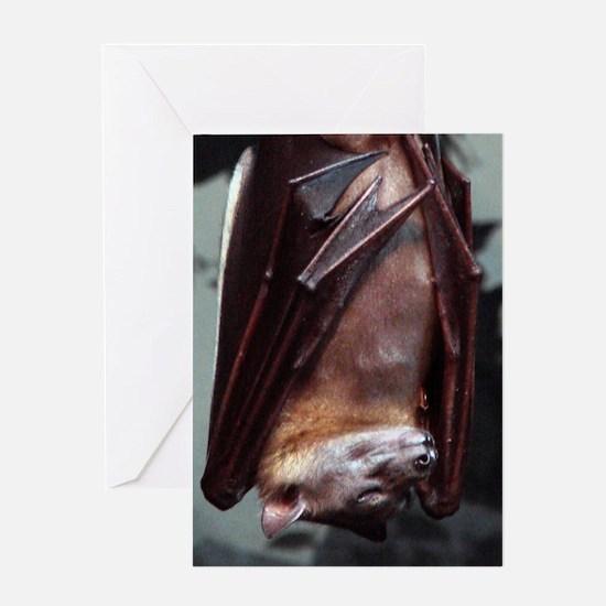 A sleeping Straw-Colored Fruit Bat Greeting Card