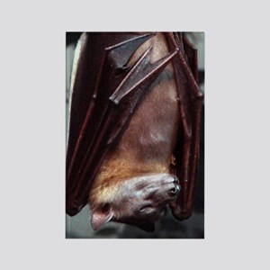 A sleeping Straw-Colored Fruit Bat Rectangle Magne