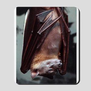 A sleeping Straw-Colored Fruit Bat Mousepad