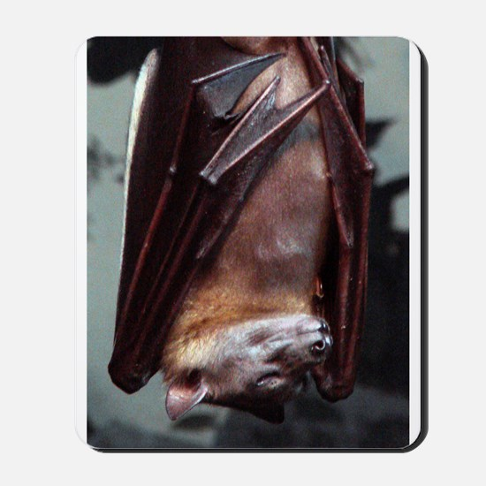 A sleeping Straw-Colored Fruit Bat Mousepad